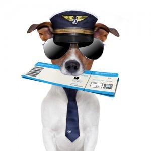 Você confiaria neste piloto?